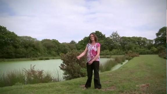 Assainir l'eau par lagunage