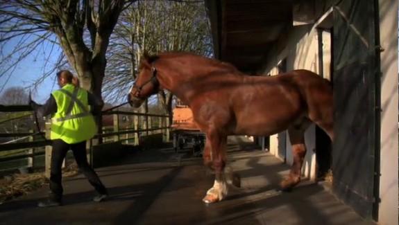 Le retour du cheval de trait