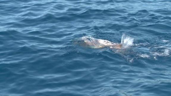Pêche aux leurres en Méditerranée
