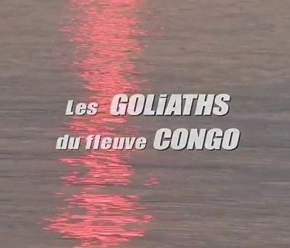 Le GoliathTiger Fish – Republique Democratique du Congo