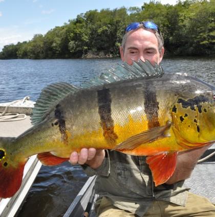 Les Peacock Bass du Rio Negro
