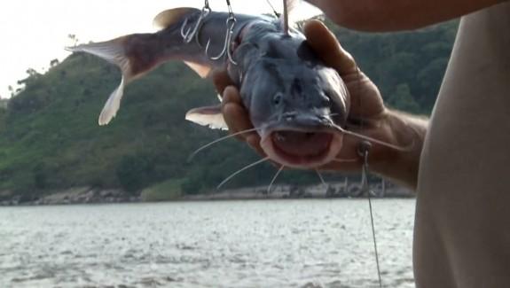 BA Les Goliaths du fleuve Congo