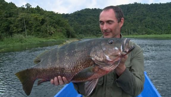 BA Les prédateurs des fleuves de Papouasie