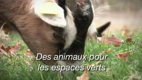 Des animaux pour les espaces verts